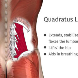 Quadratus Lumborum – Lower back pain
